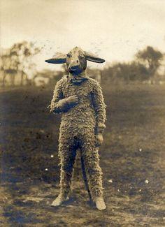 Sheep man.