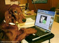 Ligand dog stuff blog loyal follower!