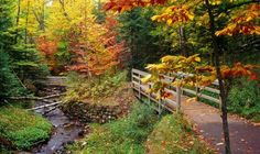 Munising Falls Trail, Michigan- what a beautiful place for an autumn walk! Munising Falls, Modern Homesteading, Down South, Southern Belle, Southern Charm, Southern Pride, Southern Comfort, Southern Sayings, Southern Humor
