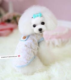 Dog petit ours - little bear  www.sweetiedog.com #dog #puppy #poodle #dogclothes