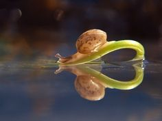Spectacular Macro Details Reveal the Intimate Life of Snails - My Modern Metropolis Vyacheslav Mishchenko's website