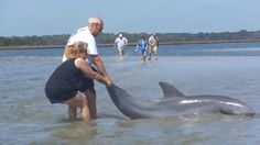 Father-Daughter duo rescue stranded dolphin