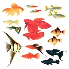Using Colloidal Silver in Your Fish Tank or Aquarium -- Experienced colloidal silver users know that colloidal silver works wonderfully to help heal infections and injuries in aquarium fish. Not only that, but it helps keep fish looking more vibrant and alive, and it helps keep aquarium water sparkling clear, as well, by killing the bacteria that create cloudy water.  Learn more here:  http://thesilveredge.com/using-colloidal-silver-in-your-fish-tank-or-aquarium.shtml