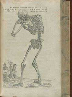 6968d7804f Page 165 of Andreas Vesalius' De corporis humani fabrica libri septem,  featuring the illustrated woodcut of the posterior view of a skeleton that  is ...