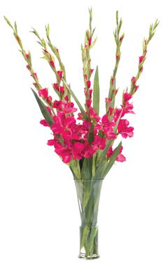 """Search Results for """"ndi gladiola fuchsia in glass tapered vase – domino Gladiolus Centerpiece, Centerpieces, Gladiolus Wedding, Wedding Flowers, Flower Vases, Flower Arrangements, Wedding Designs, Wedding Ideas, Glass Vase"""