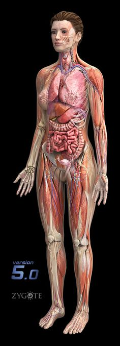Learn Anatomy Online: Terms of movement | kinesiology | Pinterest ...