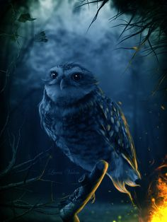 The powers Owl are clairvoyance, astral projection and magic. In essence, the owl sees what others do not, and may have more insights about other people. The Great Spirit