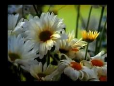 SINGING TIME IDEA: I Stand All Amazed - Hymn #193 - YouTube Sung by Stephanie Hill