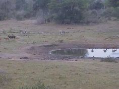 LIVE animal cam @ Tembe Elephant Park in Swaziland, Africa