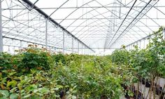 A community-run greenhouse brings fresh produce to the Arctic.