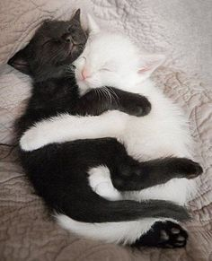 Sleeping and Hugging #cats