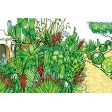 Top 10 Landscape Mistakes - Phoenix Home & Garden