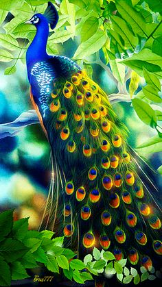 Peacock Art...By Artist Unknown...                                                                                                                                                      More