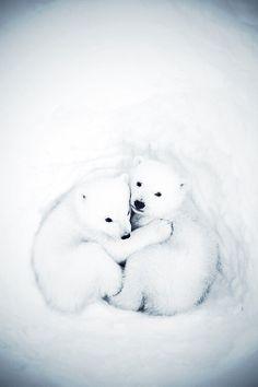 Cub cuddle