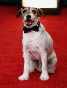 the ONLY way to wear fur well. Bowtie is charming!