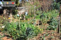 Rose Creek Estate Open Day 2014 - Leaf, Root & Fruit Gardening Services Hawthorn