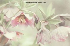 Jenny Rainbow Fine Art Photography Throw Pillow featuring the photograph Spring Pastels by Jenny Rainbow Art Prints For Home, Prints For Sale, Home Art, Fine Art Prints, Framed Art, Framed Prints, Russian Art, Pillow Sale, Shabby Chic Style