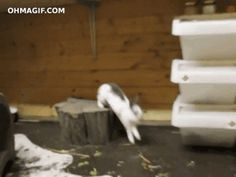 21 Bunnies You Won't Believe Actually Exist #refinery29  http://www.refinery29.com/the-dodo/51#slide-15  This one that has a bright future in parkour.