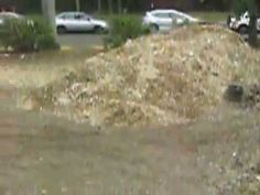 http://stumpgrindingbrisbane.net/stump-grinding-and-removal-ipswich/ Stump Grinding Ipswich.