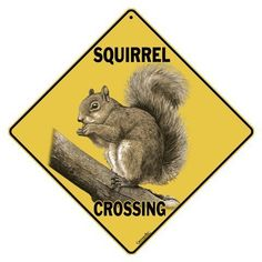 "Squirrel Crossing 12"" X 12"" Aluminum Sign Crosswalks https://smile.amazon.com/dp/B00GB400IG/ref=cm_sw_r_pi_dp_x_yzd3ybCGSC54C"