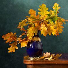 Oak Leaves by Nikolay Panov on 500px