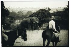 The ultimate experience - on horseback in big game country. Kenya Horseback Riding Safaris www.safarisunlimited.com