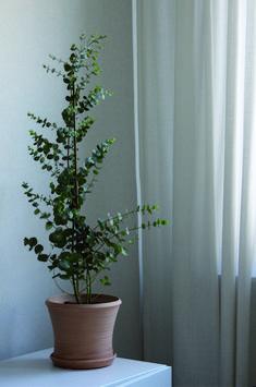 Eukalyptus!