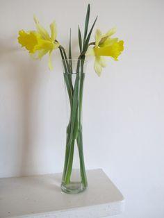 Cassie Liversidge- spring daffodils