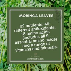 Our Premium 100% Organic Raw Moringa Oleifera Leaf Powder is the one thing you need to fuel your body the way it deserves. Each scoop is packed with anti-inflammatory properties, 92 nutrients, 46 antioxidants, 18 amino acids, and a range of vital vitamins and minerals. . . . . #moringaleaves #morinacapsules #herbalsupplements #madefromnature #superfood #superfoods #superfoodlovers #healthyeats #organiceats #veganeats #moringasuperfood #superfoodcapsules #vitamin #moringatree #moringaoleifera… Moringa Leaves, Amino Acids, Vitamins And Minerals, Superfoods, Powder, Healthy Eating, Range, Organic, Instagram