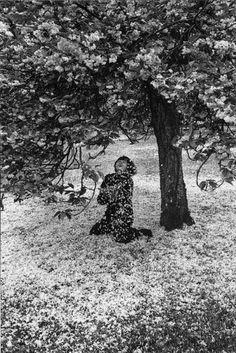 Boubat Edouard, Cerisiers japonais en fleurs, Parc de Sceaux, Paris, 1983