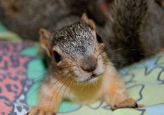 Wildlife Rescue - San Antonio, Texas