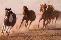 Herd - Nice herd gallops in the dust