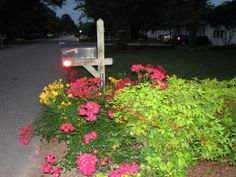 Mailbox Planting Brightens Up  Entrance w/  Summer Flowers, When you first enter my driveway  or just pass by on the street you are greeted ...