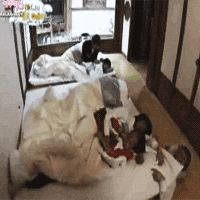 Shinee hello baby, lol but why is Jonghyun under the futon xD