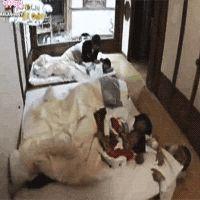 Shinee hello baby, lol but why is Jonghyun under the futon xD