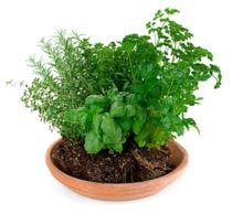 Indoor herb garden on pinterest herbs garden indoor for Indoor gardening for beginners