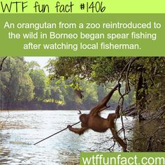 awesome animal facts WTF FUN FACTS HOME / SEE MORE tagged/ animals FACTS
