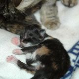 Kitten Progression: At-a-Glance - Alley Cat Allies