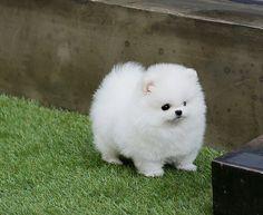 Wittle marshmallow