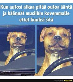 Funny Shit, Funny Memes, Jokes, Some Fun, Finland, Videos, Lol, Texts, Travel