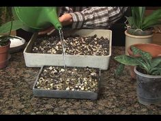 How to Grow Orchids   The Garden Glove
