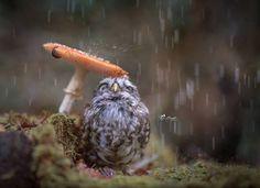 fotophotoshop-baykus