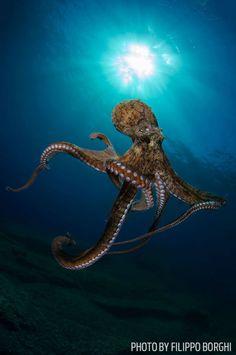Scuba Diving Magazine's 2014 Photo Contest Winners | Scuba Diving