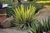 drought resistant plants - Google Search