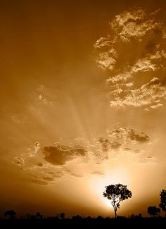 Divine Light - A beautiful image in sepia Tone showing silhouette image of a tree,sunlight & clouds. What A Wonderful World, Beautiful World, Beautiful Images, Pretty Pictures, Cool Photos, Image Nature, Silhouette Images, Divine Light, Scenery