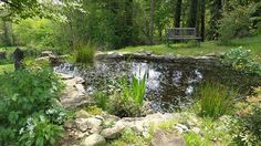 The pond of life x