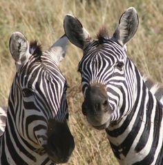 Africa Tanzania (Tanzania Tanzania, Mystic, Africa, Creatures, Animals, Faces, Animales, Animaux, Animais