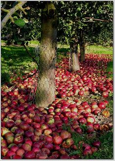 Orchard Time