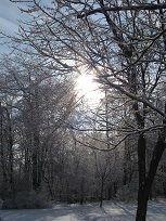 Sunrise through the icy trees