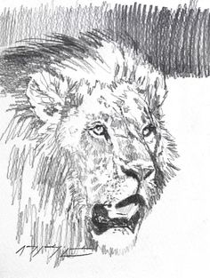Simba - Graphite on Paper - Amy Sandys-Lumsdaine, Wildlife & Travel Artist based in Nairobi, Kenya. The Incredibles, Sketch Book, Art Studio, Wildlife Art, Moose Art, Painting, Male Sketch, Art, Still Life Artists